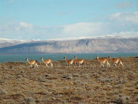 Explora Patagonia El Chalten Viedma Glacier Ice Hiking