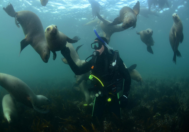 Explora Patagonia Puerto Madryn Diving whit Sea Lions