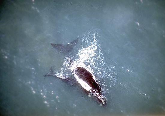 Explora Patagonia Whale Whatching in Peninsula Valdes